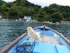 犬と一緒に海上散歩